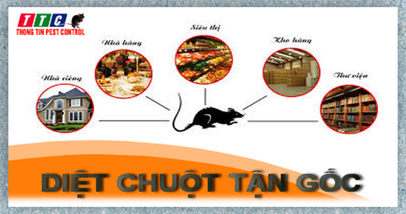 diet chuot tan goc tai ha noi